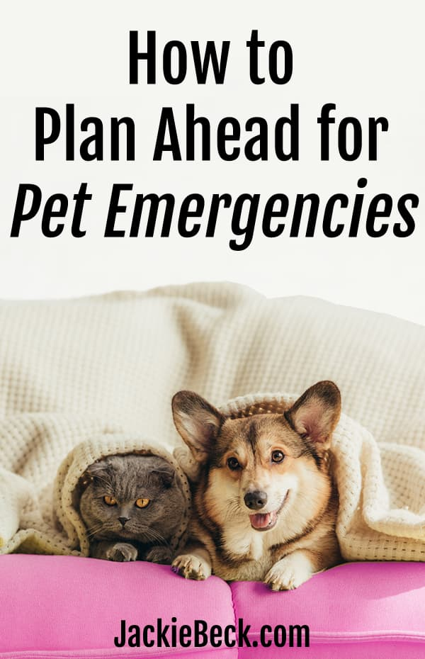 How to plan ahead for pet emergencies - cat and welsh corgi dog lying under blanket on sofa